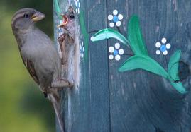 sparrow-528042